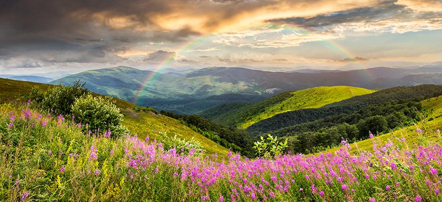 Wildblumen | Tierbestattung Straubing